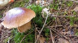 Herbstanfang: Auszeit im heimischen Wald - Pilzsammler unterwegs