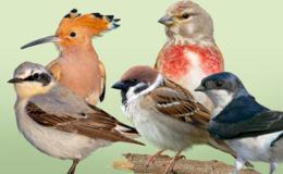 Wählen Sie Ihren Favoriten: Wer wird Vogel des Jahres?