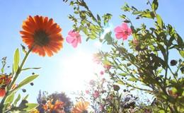Sommer nimmt Fahrt auf: Hoch Waltraud bringt angenehme Temperaturen