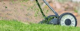 NABU Hessen: Gartenabfälle korrekt entsorgen - nicht in Feld und Wald