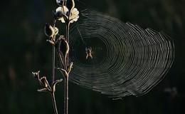 NABU Hessen: Zum Herbstanfang zieht es vermehrt Spinnen ins Haus