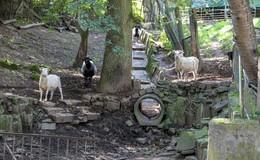 Heimattiergarten schließt für mehrere Monate wegen Bauarbeiten