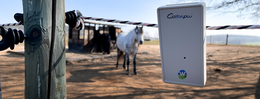 Digitale Weidezaun-Überwachung spart Zeit: Innovative Lösungen für Landwirte