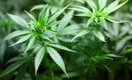 Erhöhter Drogenkonsum unmittelbar mit der Pandemie verbunden