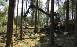 Forstarbeiten beginnen: Rückkehr zu einem Birken-Moorwald im Roten Moor