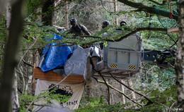 Hambacher-Forst-Urteil: Auch Räumung im Dannenröder Forst rechtswidrig?