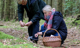 Unterwegs mit Förster Jochen Rümann - Auf Pilzsuche im Gieseler Wald