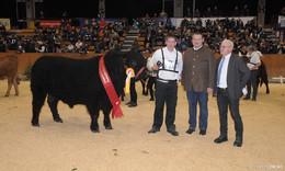 34. Fleischrindertag: Nachfrage bei Angus und Limousin hoch