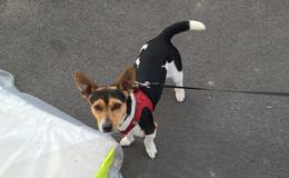 Hund Jack bekommt Schreck und läuft weg: Wo ist der Vierbeiner?