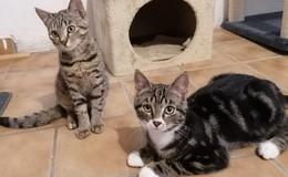 Lotta, Jack oder Smilla: Süße Katzenbabys zu vergeben