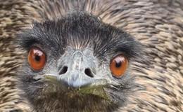 Glückliche Besitzer: Das Emu ist wieder da