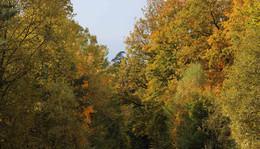 Seulingswald wird bunt: Farbenpracht in den Wäldern