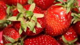 Erdbeeren-Kaiser freut sich über den Regen: Die Früchte werden schön