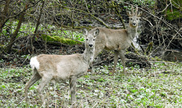 Wald vor Wild: Droht das neue Bundesjagdgesetz doch noch zu kippen?