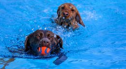 Erstes Hundeschwimmen im Freibad der Ulsterwelle in Hilders - ein voller Erfolg!