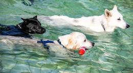 Tierische Pool-Party: Hunde-Schwimmen im Alsfelder Erlenbad