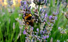 Insektenfreundliche Wiesenpflege: Weniger Mähen für mehr Natur