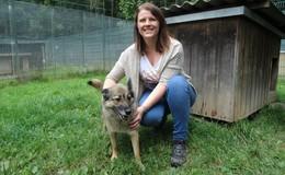 Personalmangel im Tierheim: Tatkräftige, ehrenamtliche Helfer gesucht
