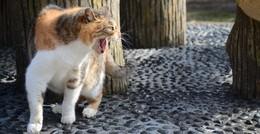 Grüne Anfragen zur StVV: Kommunales von Katzen über Klos bis Kantine