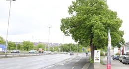 Sommerlinde in der Frankfurter Straße gefällt