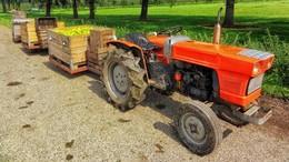 Tragisches Unglück bei der Obsternte: Senior von Traktor erfasst