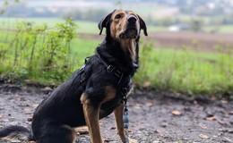 Herrchen plötzlich verstorben: Hundedame Gipsy sucht ein liebevolles Zuhause
